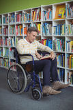 Attentive disabled school teacher reading book in library Royalty Free Stock Images