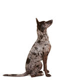 Attentive dog learning command sit Royalty Free Stock Image