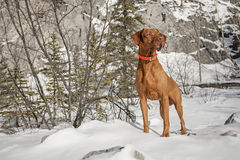 Attentive dog outdoors Stock Image
