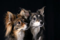Attentive Dogs royalty free stock photography