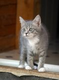 Attentive kitten Stock Images