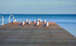Attentive seagulls on pier stock images