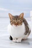 Attentive stripy cat outdoors on neutral background Royalty Free Stock Photos