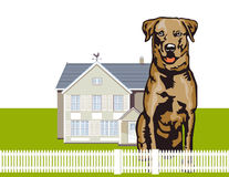 Attentive watchdog Stock Photo