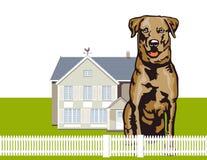 Attentive Watchdog Stock Photo