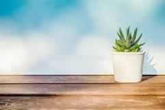 Attenuata de Haworthia, succulent dans le pot de fleurs blanc sur la table en bois, sur le fond bleu blanc au soleil, avec l'espa Photographie stock