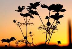 Attenzione di comando dell'universo in un tramonto dell'Arizona Fotografie Stock