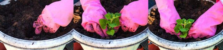 Atterraggio del fiore in un vaso da fiori Fotografie Stock Libere da Diritti