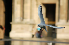 Atterraggio dell'uccello Fotografia Stock