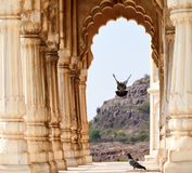 Atterraggio dell'uccello, Jodhpur, Ragiastan, India Immagine Stock Libera da Diritti