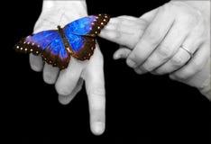 Atterraggio della farfalla Fotografia Stock Libera da Diritti