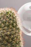 Atterraggio di Soapbubble su un cactus Immagine Stock
