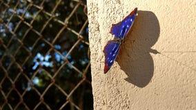 Atterraggio di una farfalla fotografie stock