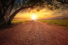 Atterri lo scape della strada dustry nella scena rurale e nella grande pianta dell'albero di pioggia Immagini Stock