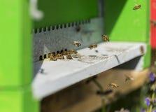 Atterrissage d'abeille sur la ruche image libre de droits