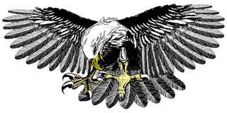Atterrissage d'aigle Photos libres de droits