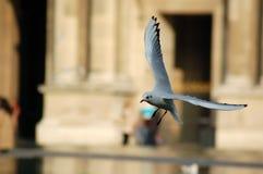 Atterrissage d'oiseau Photographie stock
