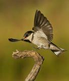 Atterrissage d'oiseau sur une branche Images stock