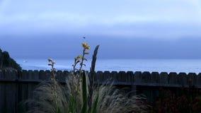 Atterrissage de colibri sur l'usine avec l'océan et le ciel obscurci à l'arrière-plan clips vidéos