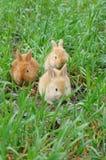 Atterrissage de lapin Photographie stock