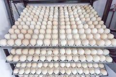 Attesa dell'uovo sopportata in azienda agricola Fotografie Stock Libere da Diritti