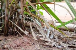 Attesa di attesa dei gatti Fotografie Stock