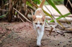 Attesa di attesa dei gatti Immagine Stock