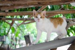 Attesa di attesa dei gatti Fotografia Stock Libera da Diritti