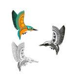 Atthis Alcedo kingfisher Голубая летящая птица изображение шаржа Стоковые Фотографии RF