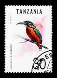 Atthis comuni del Alcedo del martin pescatore, serie degli uccelli, circa 1992 Immagini Stock Libere da Diritti