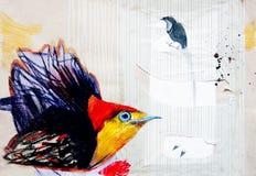 Attingere carta dell'uccello di paradiso Fotografie Stock Libere da Diritti