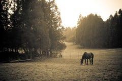 Attirez l'horizontal avec le cheval Photographie stock libre de droits