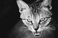 Attitude angry me stay away from me anger. Stay away from me cat& x27;s attitude royalty free stock photography