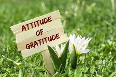 Attitude of gratitude. On wooden sign in garden with white spring flower stock photo