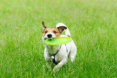Attività all'aperto di estate: gioco di plastica del disco con un cane fotografie stock libere da diritti