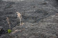 Attività del vulcano, Hawai, U.S.A. Fotografie Stock