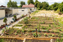 Attività di giardinaggio in un campo profughi tedesco Fotografie Stock