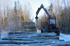 Attività di silvicoltura Immagine Stock Libera da Diritti