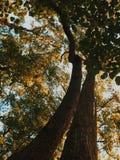 Atto naturale Fotografia Stock Libera da Diritti