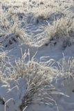 Attracchi con i trapuntare di erba in neve Fotografia Stock Libera da Diritti