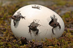 Attracchi la rana, bambini di arvalis del Rana Immagine Stock Libera da Diritti