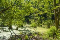 Attracchi nella foresta del faggio del parco nazionale di Jasmund vicino a Sassn immagine stock libera da diritti