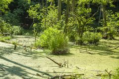 Attracchi nella foresta del faggio del parco nazionale di Jasmund vicino a Sassn immagini stock