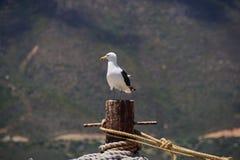 Attracco e corde del gabbiano con un contesto della montagna Fotografia Stock Libera da Diritti