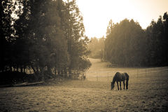 Attract landscape with horse Royalty Free Stock Photography