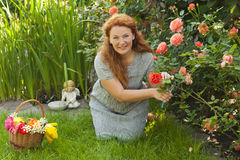 Attractive adult woman cuts flowers roses in the yard Stock Photos