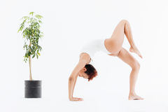 Attractive african american flexible woman doing backbend yoga pose royalty free stock photo