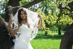 Attractive Bride stands about trees in the park Royalty Free Stock Photo