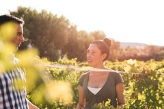 Attractive brunette and man in the vineyards stock image