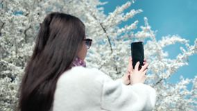 Attractive brunette woman taking photo of amazing blossom white sakura tree using smartphone. Back side view. Medium close-up female making picture of beautiful stock video